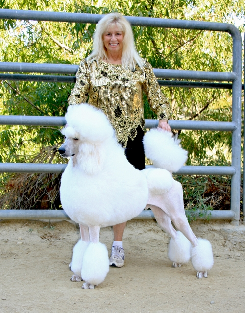 Standard Poodles For Sale in San Diego